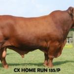 CX Home Run 135/P